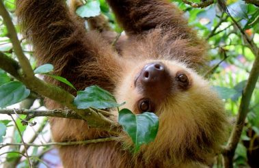 Super Cool and Awesome Sloth Gifts Just For You